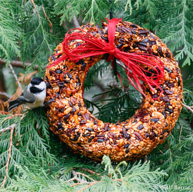 HP Cranberry Wreath